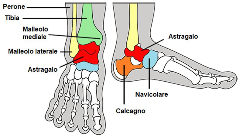 anatomia del piede e ciclismo